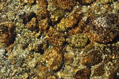 Stones under clear water flowing Royalty Free Stock Photos