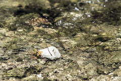 Stones under river water Stock Images