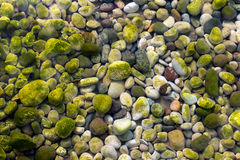 Stones Under Water with Moss Royalty Free Stock Photos