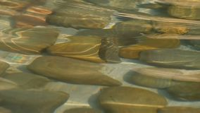 Stones under water and ripples on the water surface. Pebbles under clear water, stones covered by algae. Stones under water and ripples on the surface of the stock video footage