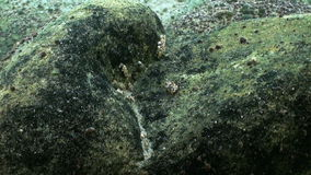 Stones underwater closeup in Lake Baikal Siberia Russia. stock video