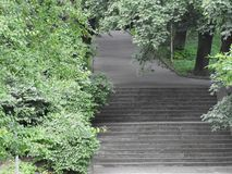 Stones wall green forest nature stairs. Stones wall green forest nature grey high Royalty Free Stock Photography