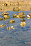 Stones in the water. Lunar landscape up to the waist in water at low tide Royalty Free Stock Image