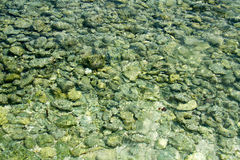 Stones and the water. Stones and clear water on the Jamaica beach Stock Photo