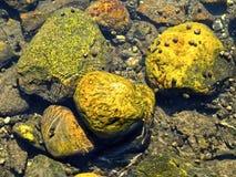 Stones in water Stock Image