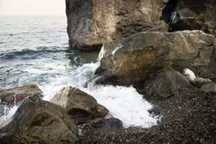 Stones with water and spray, splash. Sea coast Royalty Free Stock Images