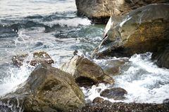 Stones with water and spray, splash. Sea coast Stock Photos