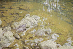 Stones and water surface. In the riverside Royalty Free Stock Image
