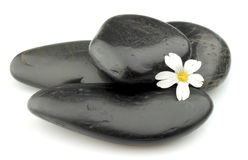 Stones with white flower Royalty Free Stock Photos