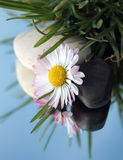 Stones and white flower in grass Royalty Free Stock Photo