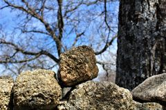 Stones and winter trees with a blue sky stock image