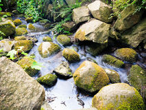 Stones in woods forest. stream in gdansk oliva park. Stock Photography