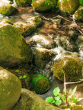Stones in woods forest. stream in gdansk oliva park. Royalty Free Stock Photos