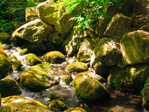 Stones in woods forest. stream in gdansk oliva park. Royalty Free Stock Photography