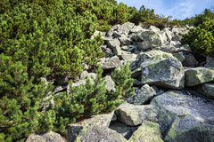 Stones and young pine trees on the slopes of the High Tatras Stock Photo