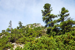 Stones and young pine trees on the slopes of the High Tatras Royalty Free Stock Photo