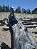 Stonestack stenkonst vaggar strandDriftwwood detaljer, träd somfilialen rotar Arkivbild