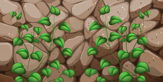 A stonewall with leaves. Illustration of a stonewall with leaves Stock Photos