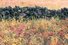Stonewall in meadow Royalty Free Stock Images