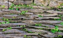 Stonewall med gräs och bladet Arkivfoton
