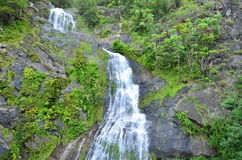 Stoney Creek Falls i Queensland Australien Arkivbilder