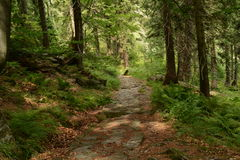 Stoney path in the forest. (in Krkonoše mountains). An exclusive photo for using in newspapers, website etc. The photo was taken in the Krkonoše mountains Stock Image