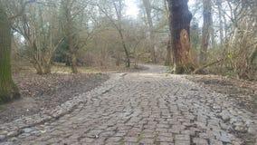 Stoney pathway Stock Image