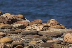 Stoney strand fotografering för bildbyråer