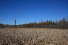 Stoney Swamp Dry Spring Royalty Free Stock Photography