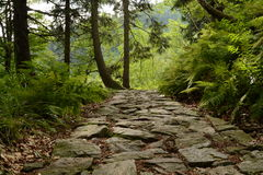 Stoney way in the forest Royalty Free Stock Photos