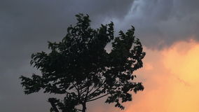 Stong Wind before thunder storm at evening. Strong Winds blowing over tree at evening. Silhouette tree branches and leaves flowing in air stock footage