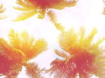Stonowany palmy tło Menchii i fiołka brzmienia Fotografia Royalty Free