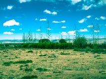 Stonowany wizerunek egzotyczni krzaki r w sawannie przeciw górom i niebu Zdjęcie Stock