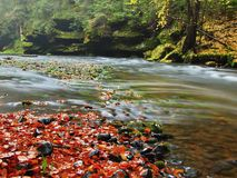 Stony bank of autumn mountain river covered by orange beech leaves. Fresh green leaves on branches above water make colorful refle Stock Photography
