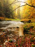 Stony bank of autumn mountain river covered by orange beech leaves. Fresh green leaves on branches above water make colorful refle Stock Photos