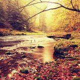 Stony bank of autumn mountain river covered by orange beech leaves. Fresh green leaves on branches above water make colorful refle Royalty Free Stock Image