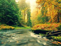 Stony bank of autumn mountain river covered by orange beech leaves. Fresh green leaves on branches above water make colorful refle Royalty Free Stock Photo