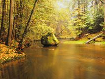 Stony bank of autumn mountain river covered by orange beech leaves. Fresh green leaves on branches above water make colorful refle Stock Image