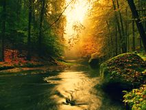 Stony bank of autumn mountain river covered by orange beech leaves. Fresh green mossy big boulders. Green leaves on branches above Royalty Free Stock Photography