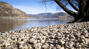 The stony bank with a tree. The stony bank of the river with a tree by Danube stock photo