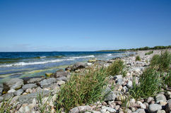 Stony bay with green reeds Royalty Free Stock Images