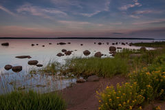 Stony beach at sunset with yellow flowers. Stony beach at sunset with beautiful yellow flowers in the foreground Royalty Free Stock Image