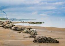 Stony on coast of Baltic sea in the morning Royalty Free Stock Photo