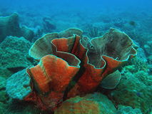 Stony coral Stock Photos