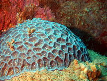 Stony corals of the South-Chinese sea Royalty Free Stock Photo
