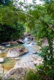 Stony Creek nas madeiras no dia de verão Fotografia de Stock