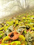 Stony field with mossy boulders in misty forest. Early morning fog. Stock Photo