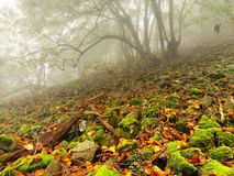 Stony field with mossy boulders in misty forest. Early morning fog. Stock Image