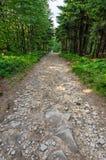 Stony hiking trail Stock Photo