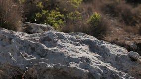 The stony hillside on the coast of the Cala Mendia. Mallorca